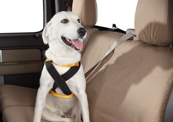 safest_dog_seat_belts_j2zex